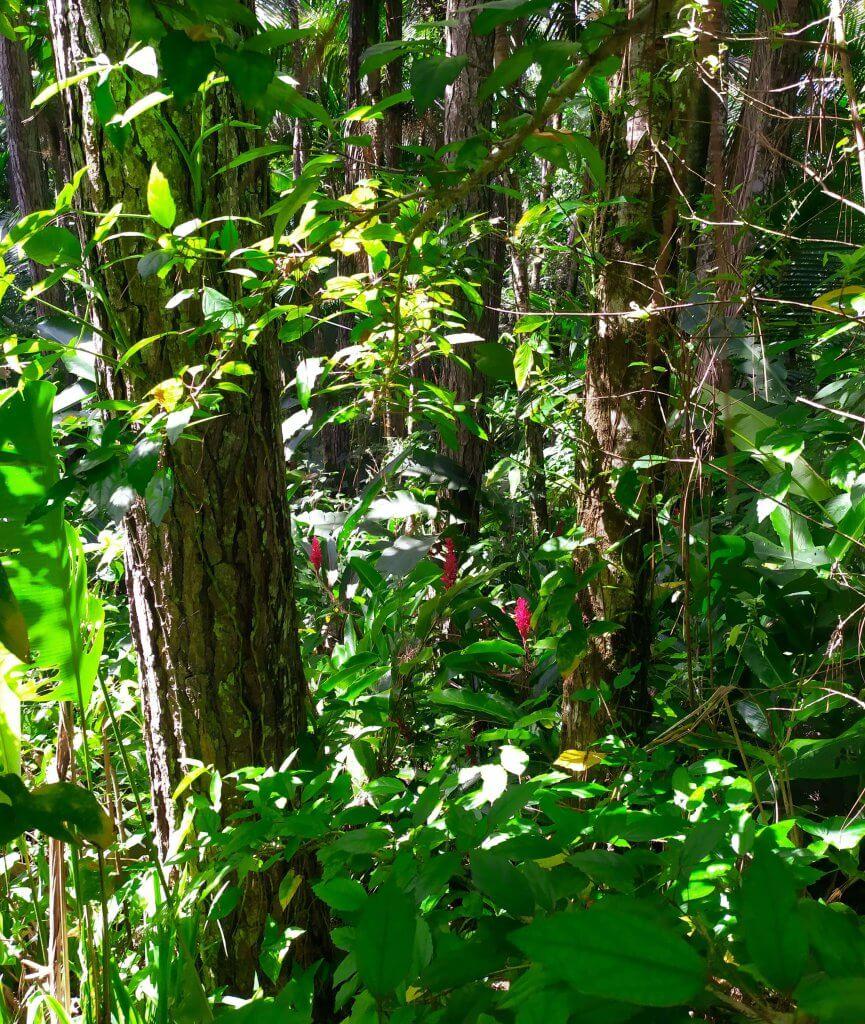 Ogród botaniczny Puerto Plata po wjeździe kolejka linowa Dominikana