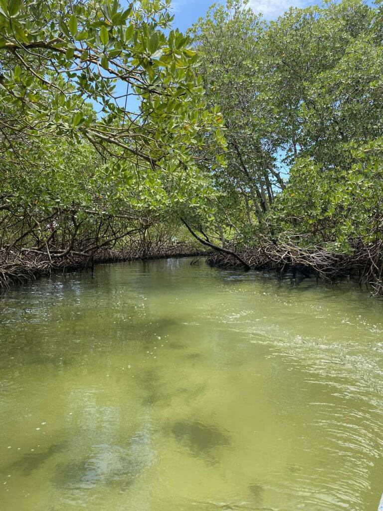 Dominikana lasy namorzynowe